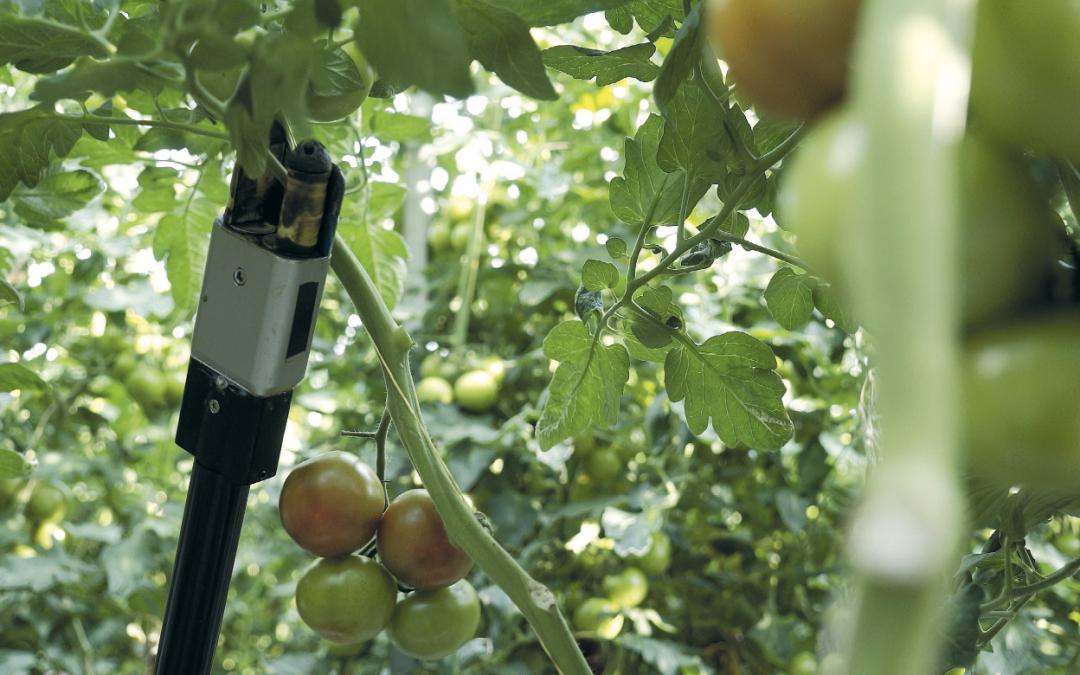 Robotisering in de tuinbouw